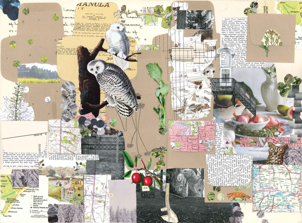collage of small brown envelopes, botanical images, and maps. There are two snowy owls on the left third of the artwork